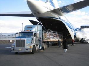 Что такое грузовые чартерные авиаперевозки